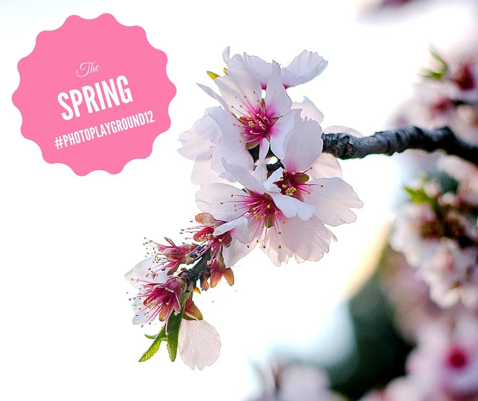 12 Spring